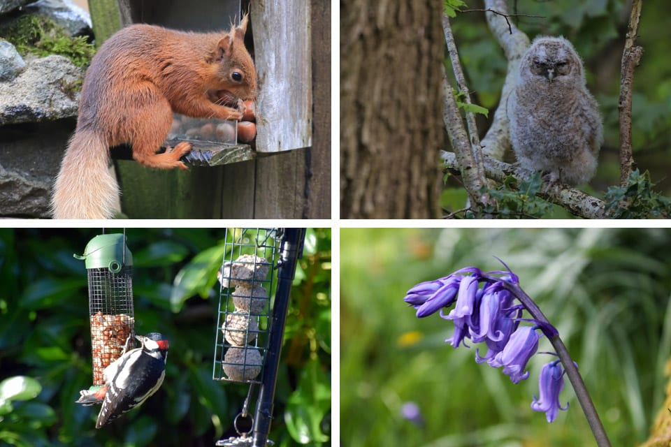 Wildlife at Brackenrigg Holiday Cottages Keswick